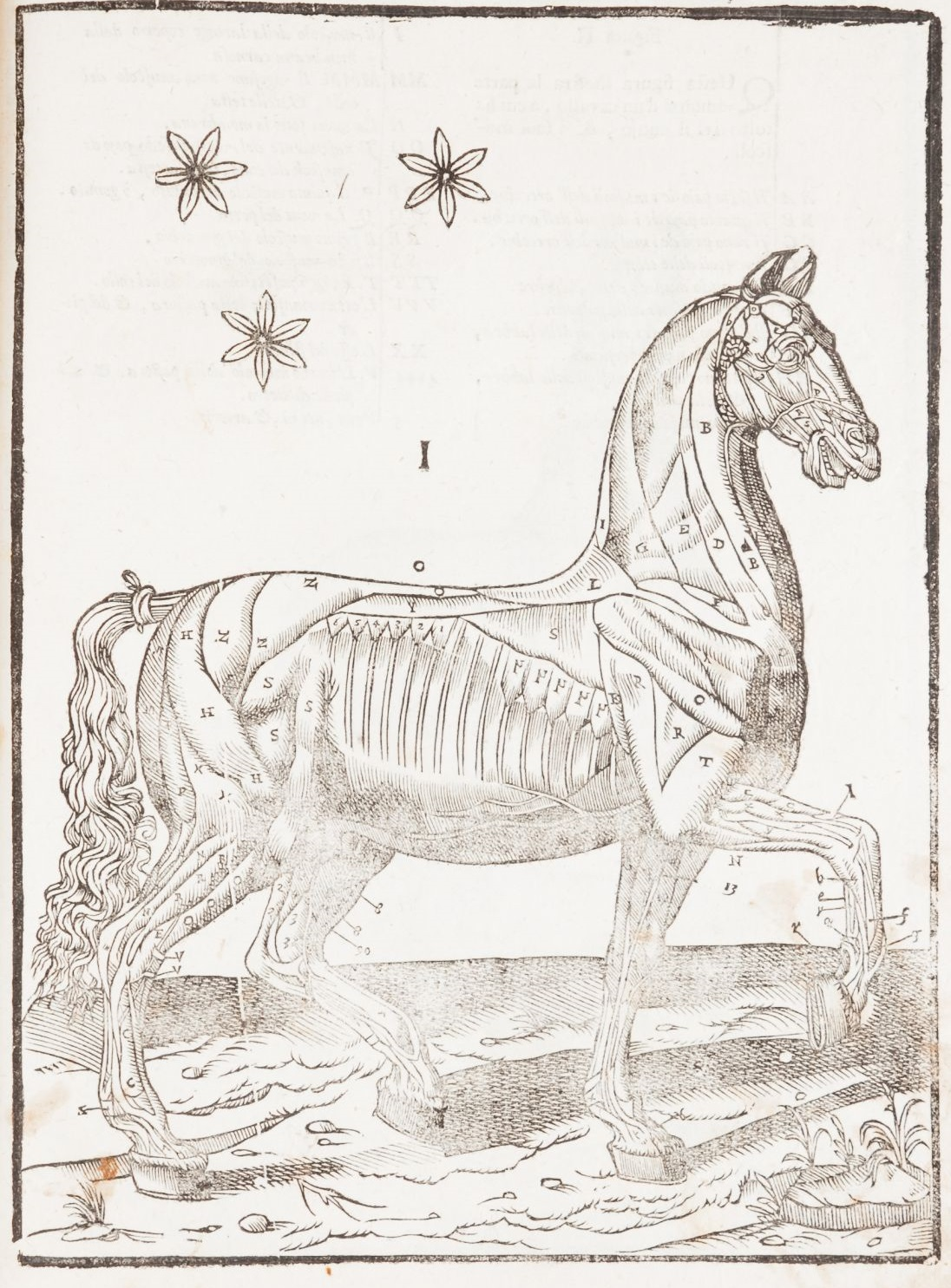 Online Sale: Antiquarian Books including two collections: Equestrian Books and 16th-century Editions